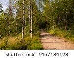 beautiful forest in lillomarka...   Shutterstock . vector #1457184128