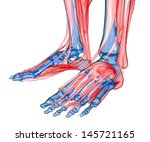 human feet under x rays... | Shutterstock . vector #145721165