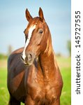 Portrait Of Beautiful Red Hors...