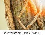 beautiful intertwined tree... | Shutterstock . vector #1457293412