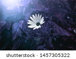 A White Daisy Like Flower In A...