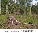 chopping wood | Shutterstock . vector #14573533