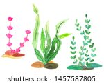 different types of seaweed.... | Shutterstock . vector #1457587805