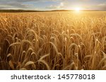 A Wheat Field With The Sun...