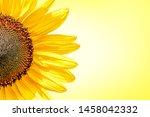 Half Of Sunflower On Yellow...