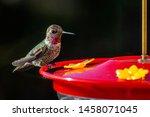 Small Hummingbird With...