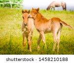 Cute Little Foal In The Meadow