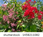 red and pink blossom flowers.... | Shutterstock . vector #1458211082