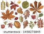 hand drawn colorful autumn...   Shutterstock .eps vector #1458273845