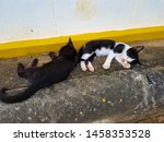 Stock photo  little kittens sleeping on the sidewalk a black kitten and another tabby sweet cats 1458353528