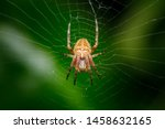 Closeup on a cross spider  also ...
