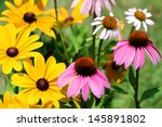 Black Eyed Susan And Purple...