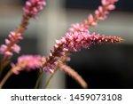 beautiful blooming mountain... | Shutterstock . vector #1459073108