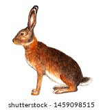 Stock photo european hare watercolor illustration hare sits isolated pattern on white background 1459098515