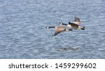 Two geese fly over wavy water...