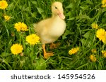 Small Yellow Duckling Outdoor...