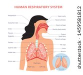 respiratory system of human the ... | Shutterstock .eps vector #1459581812
