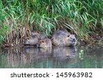 A Beaver Family