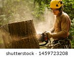 An Arborist Cutting A Tree Wit...