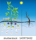 fertilizers   nutrients needed... | Shutterstock .eps vector #145973432