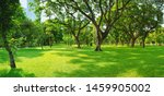 green lawn in the morning with... | Shutterstock . vector #1459905002