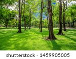 green lawn in the morning with... | Shutterstock . vector #1459905005