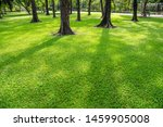 green lawn in the morning with... | Shutterstock . vector #1459905008