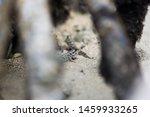 Cute Mudskipper Fiji South...