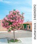 Oleander Tree In San Pantaleo ...