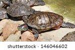 turtles    Shutterstock . vector #146046602