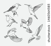 Hand Drawn Birds Collection...