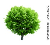 green tree isolated on white | Shutterstock . vector #14605672
