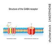 structure of the gaba receptor. ... | Shutterstock .eps vector #1460594048