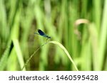 Stock photo a colorful dragonfly on plant closeup of a dragonfly odonata sitting on a leaf dragonfly blue 1460595428