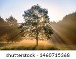 Foggy Sunrise With Sunrays...
