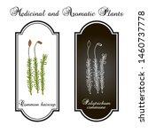 common haircap moss ... | Shutterstock .eps vector #1460737778