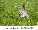 Stock photo cat 146086508