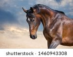 Bay Horse Portrait With Long...
