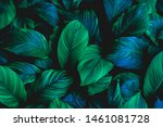 Leaves Of Spathiphyllum...