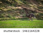 Stock photo hares running on field in sweden 1461164228