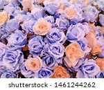 Rose Flower Background Picture...