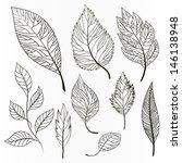 vector set of leaves ... | Shutterstock .eps vector #146138948
