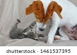 Stock photo cute puppy dog jack russel playing with a kitten 1461537395