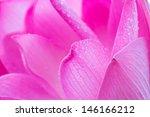 Beautiful Lotus Petals.