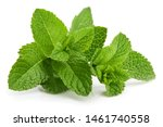 Fresh Leaf Mint Green Herbs...