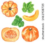 Different Orange Pumpkin Squas...