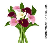 Bouquet Of Colored Calla Lilie...