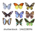 butterfly on white | Shutterstock . vector #146228096