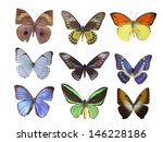 butterfly on white | Shutterstock . vector #146228186