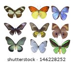 butterfly on white | Shutterstock . vector #146228252